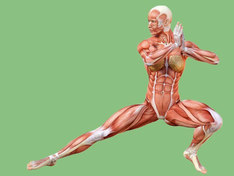 Гимнастика для долголетия и баланса организма