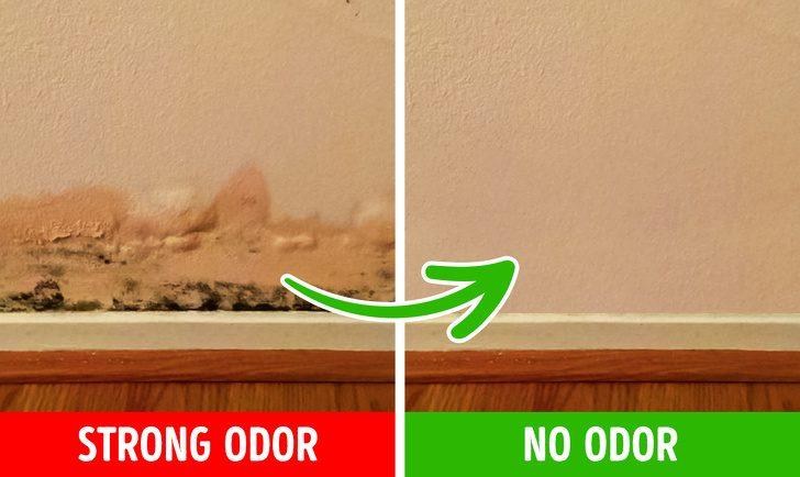 6 причин плохого запаха в вашем доме и способы их устранить