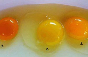 Какого цвета яичные желтки у здоровой курицы