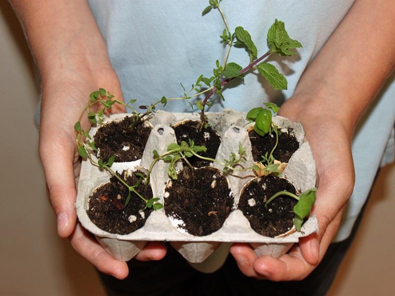 Лунки для посева: морковь, лук, редиска взойдут через неделю!