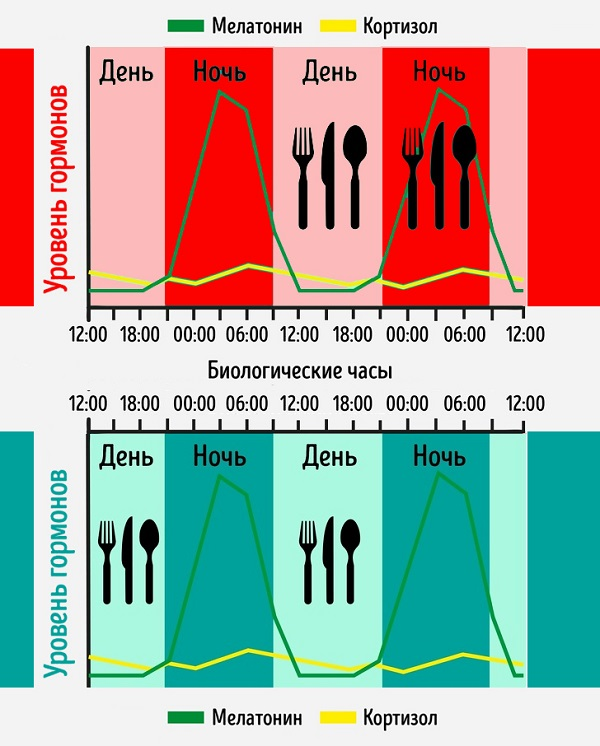 Феномен «окна питания» и главные принципы здорового похудения