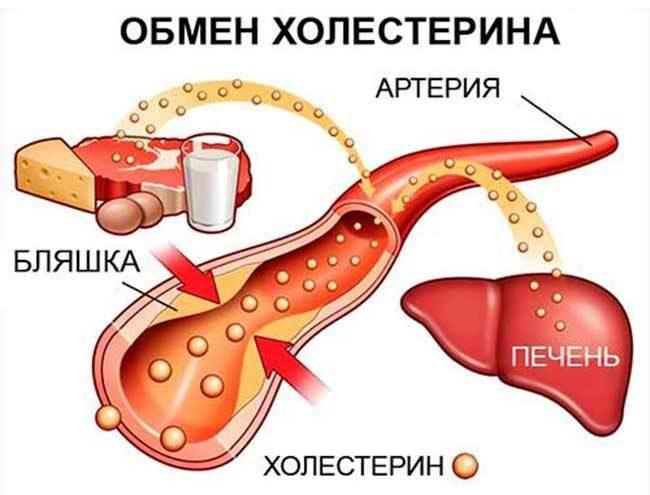 Важные факты о холестерине