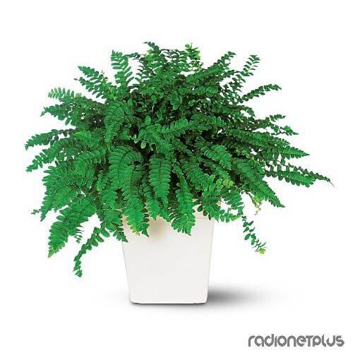 Комнатные растения, которые приносят в дом богатство