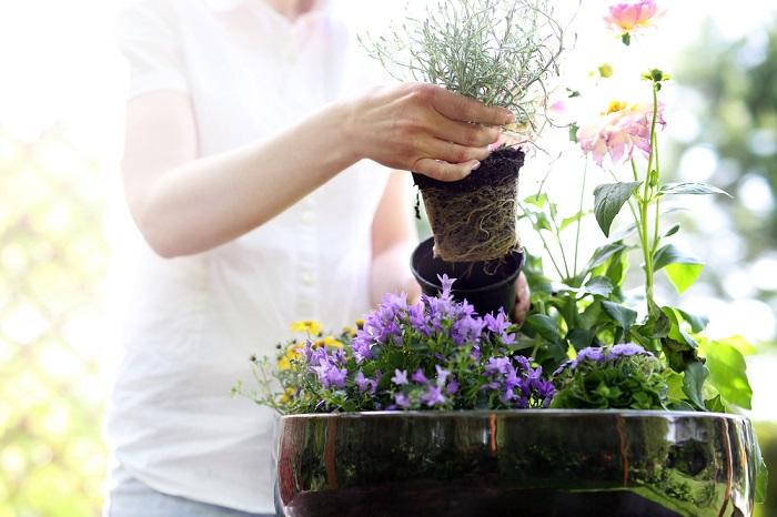После такой подкормки комнатные растения растут как на дрожжах