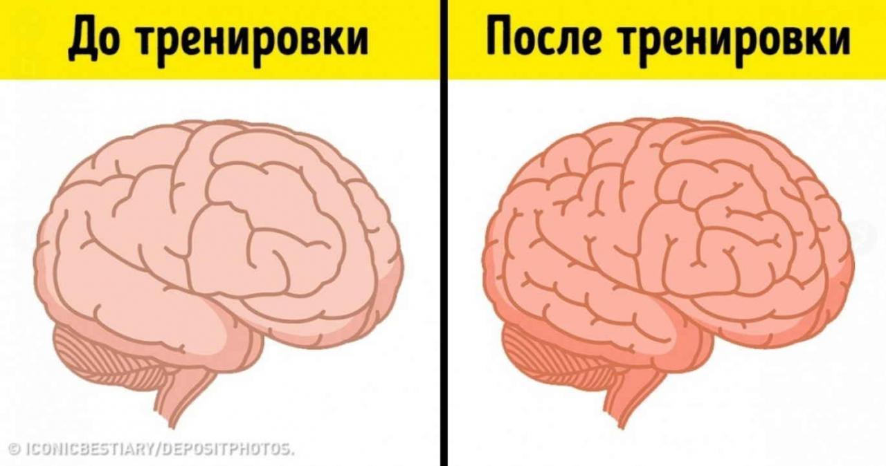 Улучшаем работу головного мозга без лекарств
