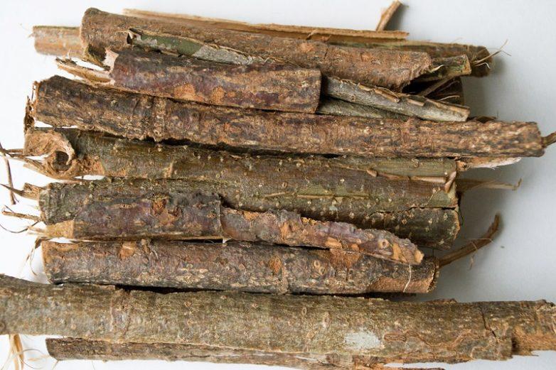 Польза коры осины для организма