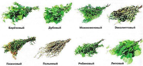 Виды и свойства банных веников