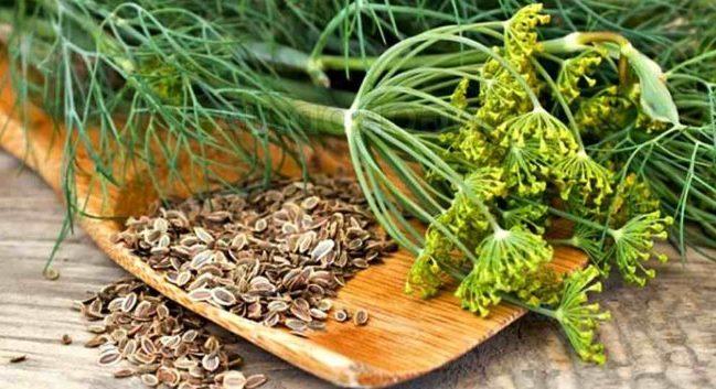 Забудете о высоком давлении благодаря семенам укропа