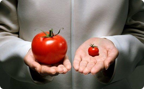 Как отличить помидоры с ГМО от натуральных?
