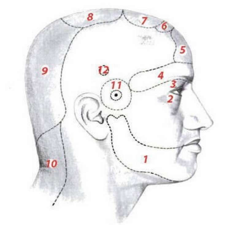 Часто болит голова? Поможем понять, о чем говорит боль в определенной части головы