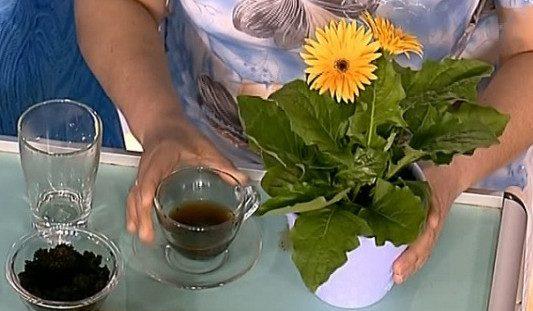 Простые и натуральные удобрения для домашних цветов - пусть цветут и радуют глаз!