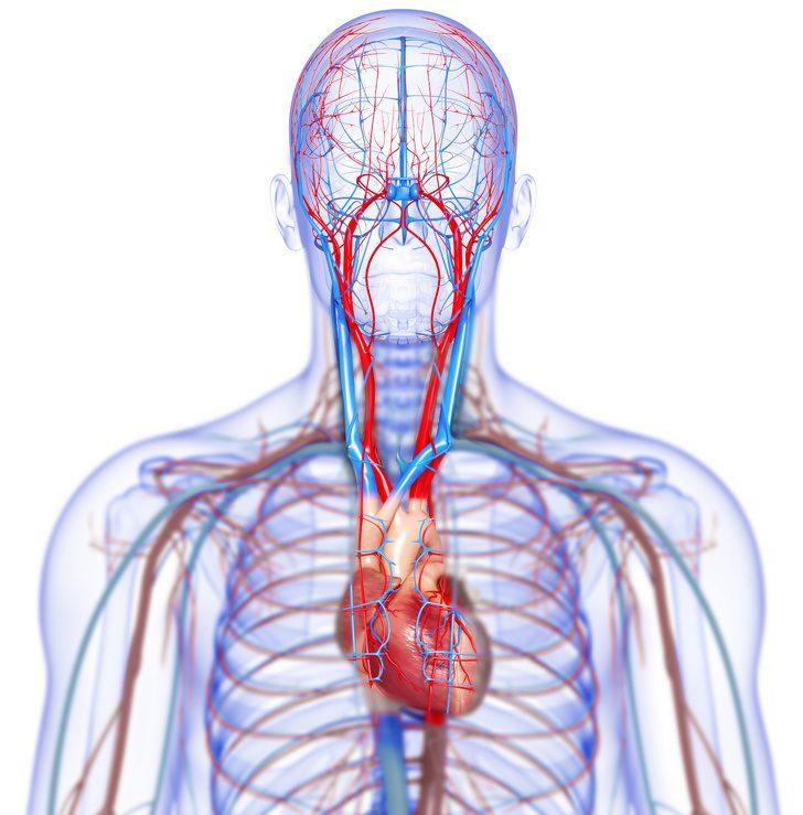 Признаки болезней сердца, которые видны невооруженным глазом