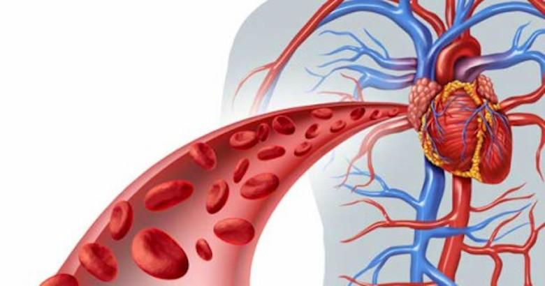 Кровообращение улучшаем и жизнь изменяем! Эффективные народные методы
