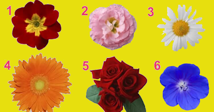 Просто выбери цветочек, а мы тебе расскажем кое-что интересное о твоей женственности