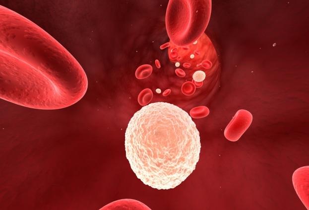 Как повысить уровень лейкоцитов в крови