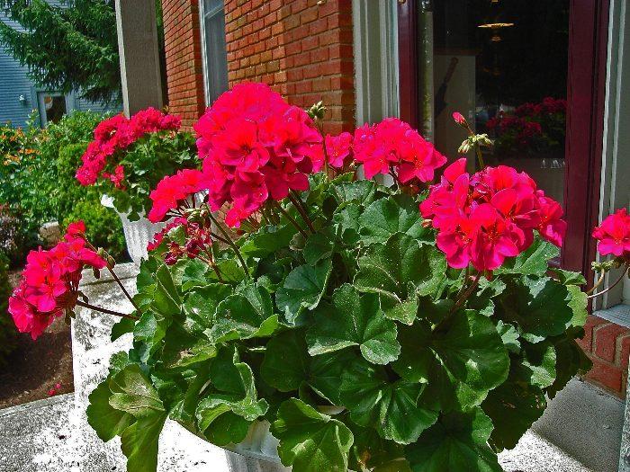 Комнатные растения для тех, кто часто ездит в командировки или просто забывает поливать цветы