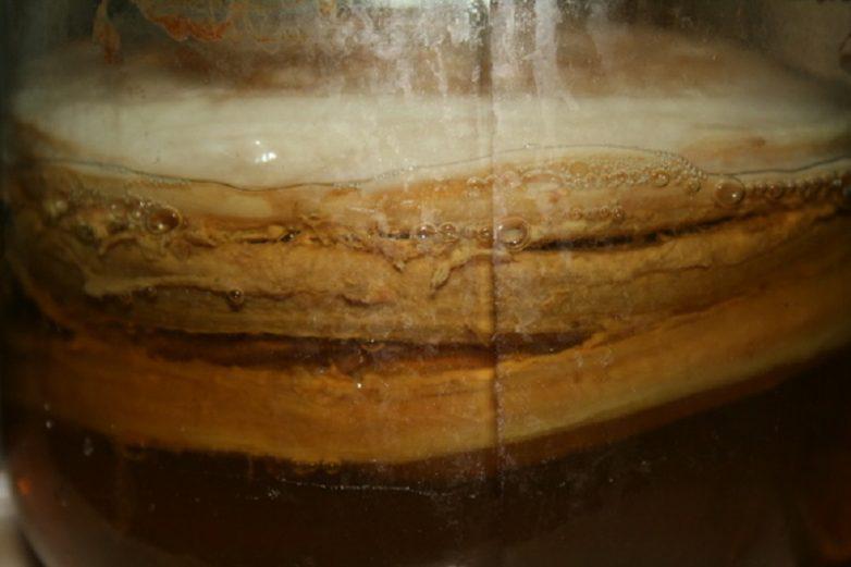 Применение и польза чайного гриба