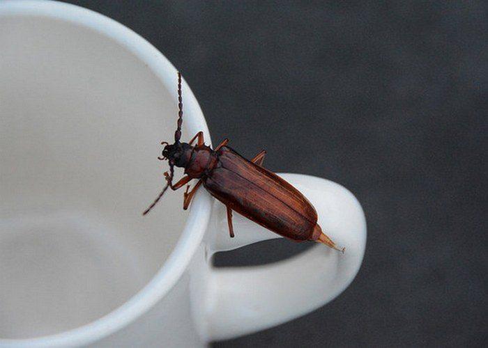 Нестандартное применение кофейной гущи