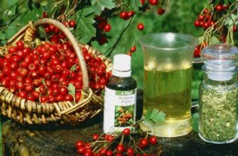 Народные средства от температуры: рецепты из лекарственных растений