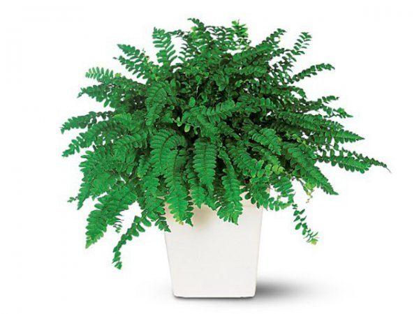 Домашние растения, которые очищают воздух