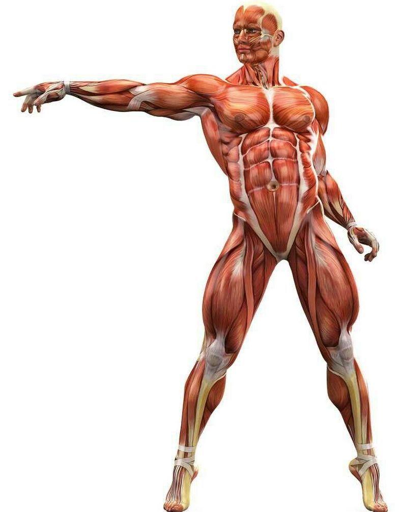 Упражнения от мышечных зажимов: эта гимнастика возвращает психическое равновесие