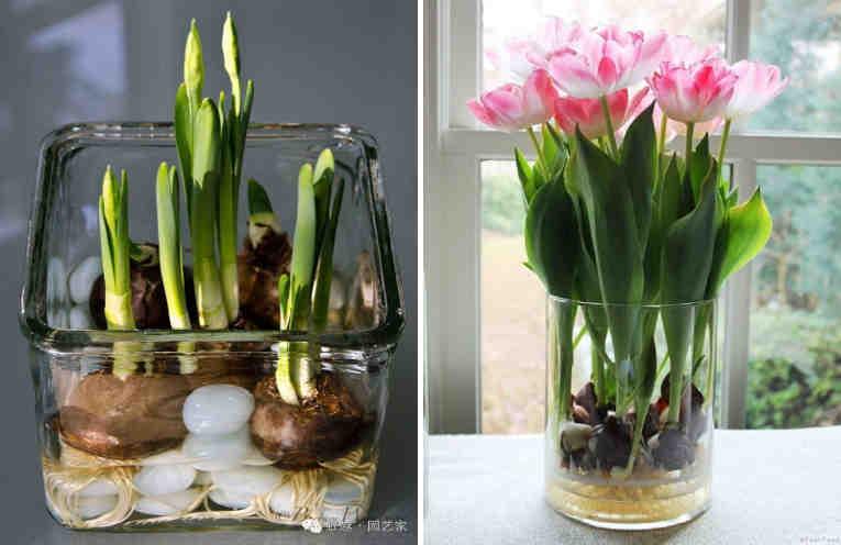 как вырастить гусеницу дома