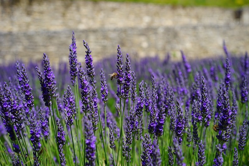 Как избавиться от вредителей в саду с помощью натуральных средств
