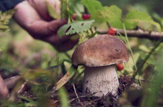 Сбор грибов 2021, срезать или выкручивать, грибные места и прочие советы миколога