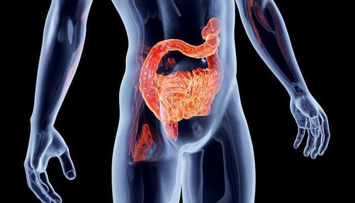 Исцелите свой кишечник: 2 переменные, которые определяют здоровье